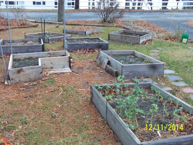 Winter Gardens - Photos - Page 2 Dec_1211