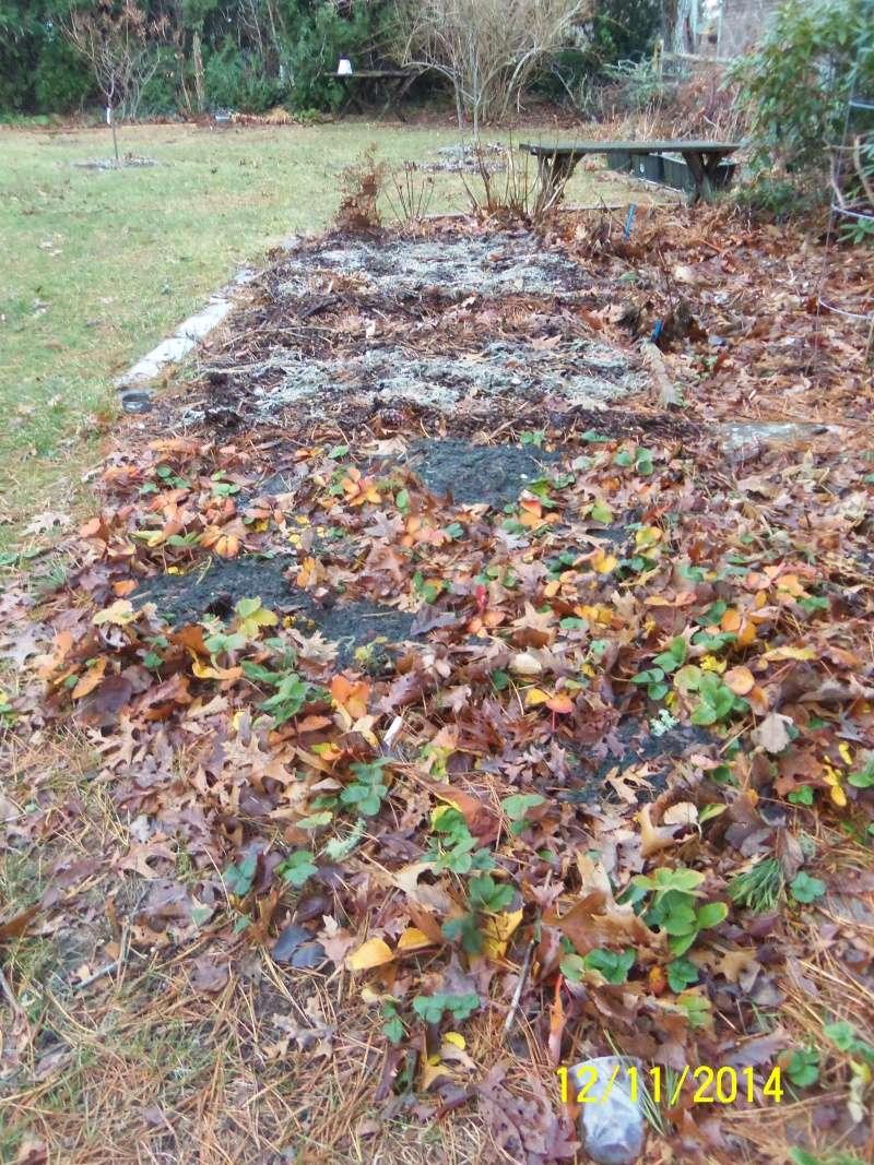 Winter Gardens - Photos - Page 2 Dec_1216