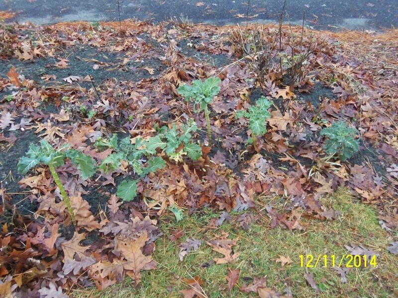 Winter Gardens - Photos - Page 2 Dec_1217