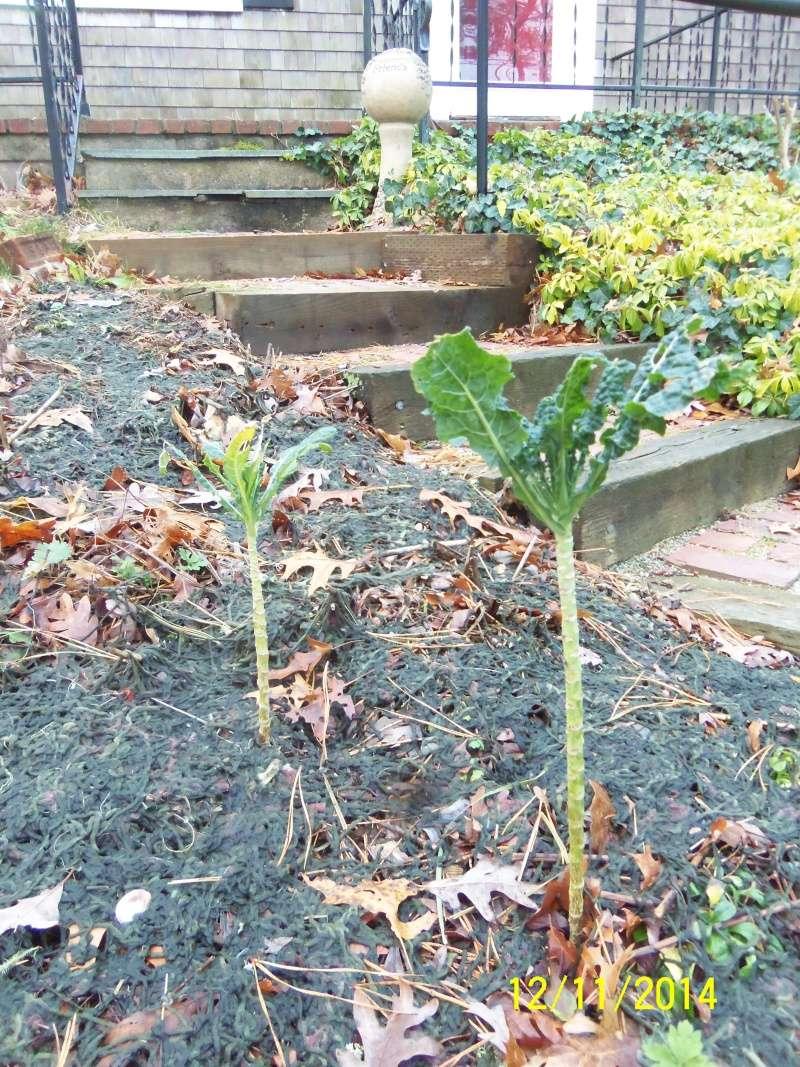 Winter Gardens - Photos - Page 2 Dec_1219