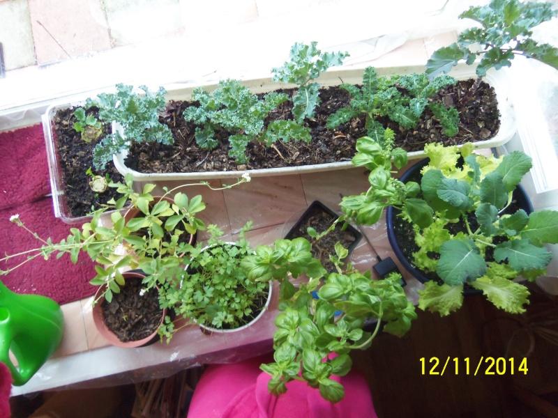 Winter Gardens - Photos - Page 2 Dec_1220