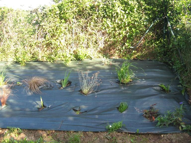 Plantation d'un talus Dytail10