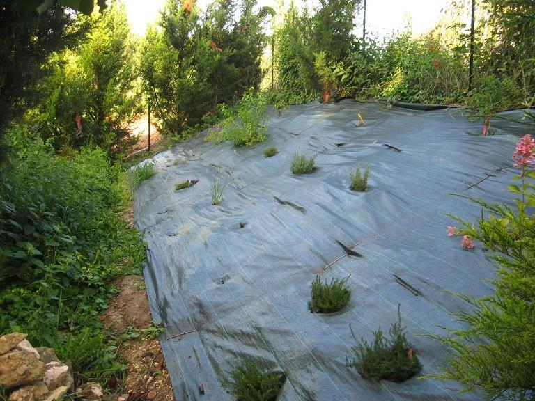 Plantation d'un talus Potage10