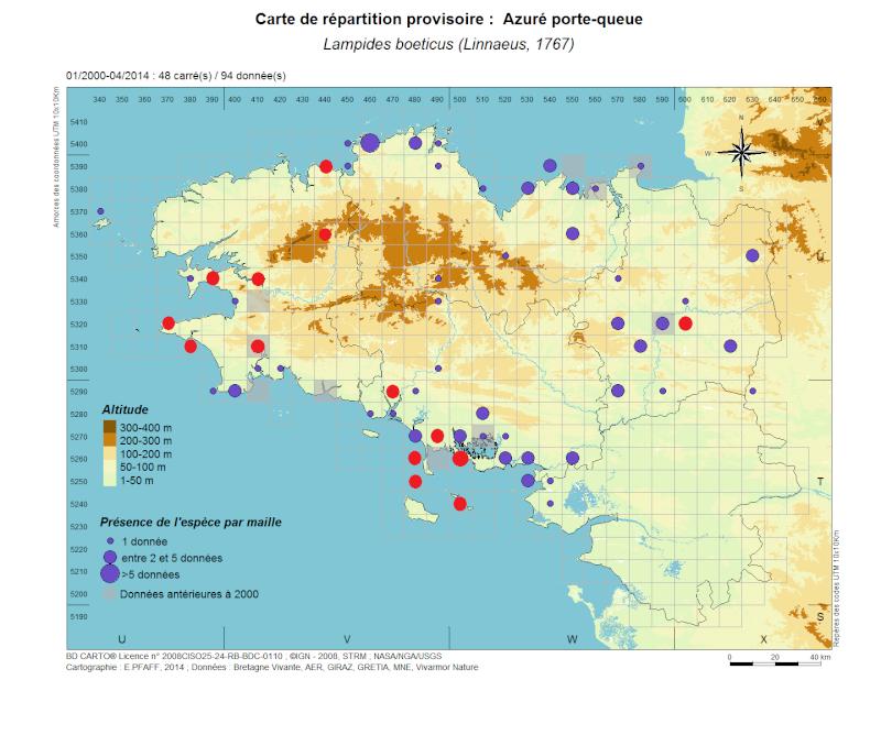 Azuré porte-queue (Lampides boeticus) Lampid13