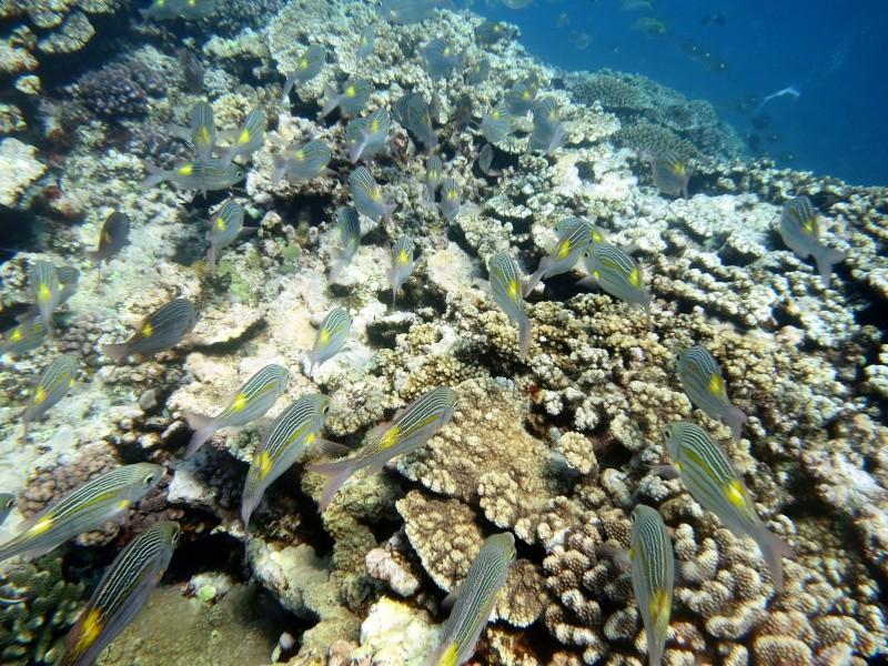 Les fonds sous marins de l'ïle de la Réunion... Img_0511