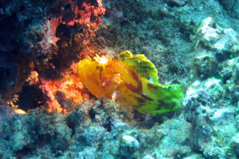 Les fonds sous marins de l'ïle de la Réunion... Img_0512