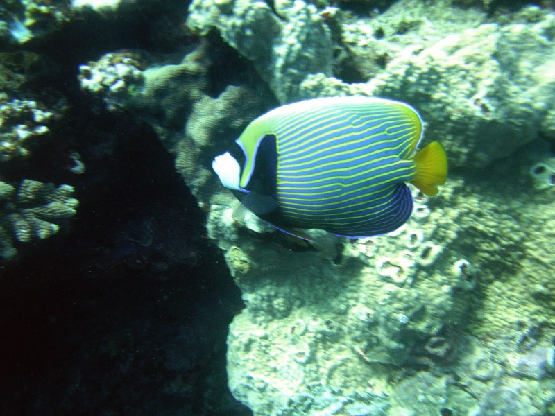 Les fonds sous marins de l'ïle de la Réunion... Img_0513