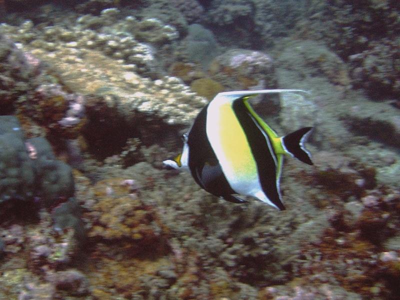 Les fonds sous marins de l'ïle de la Réunion... Img_0515