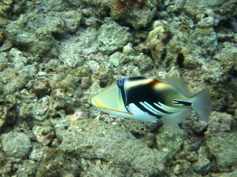 Les fonds sous marins de l'ïle de la Réunion... Img_0517