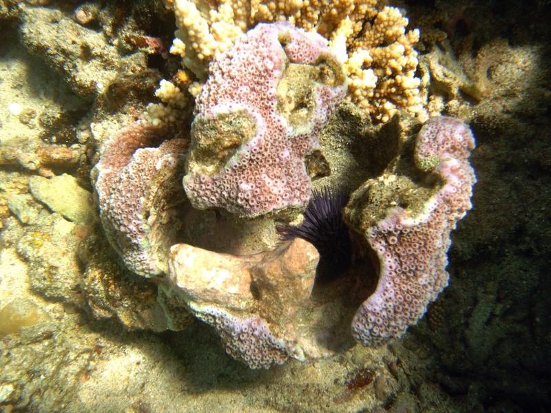 Les fonds sous marins de l'ïle de la Réunion... Img_0610