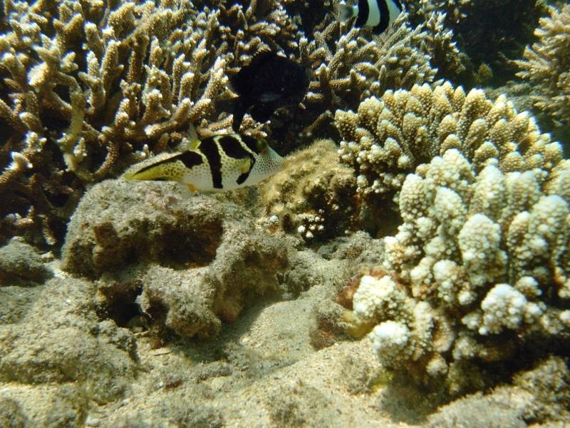 Les fonds sous marins de l'ïle de la Réunion... Img_0611