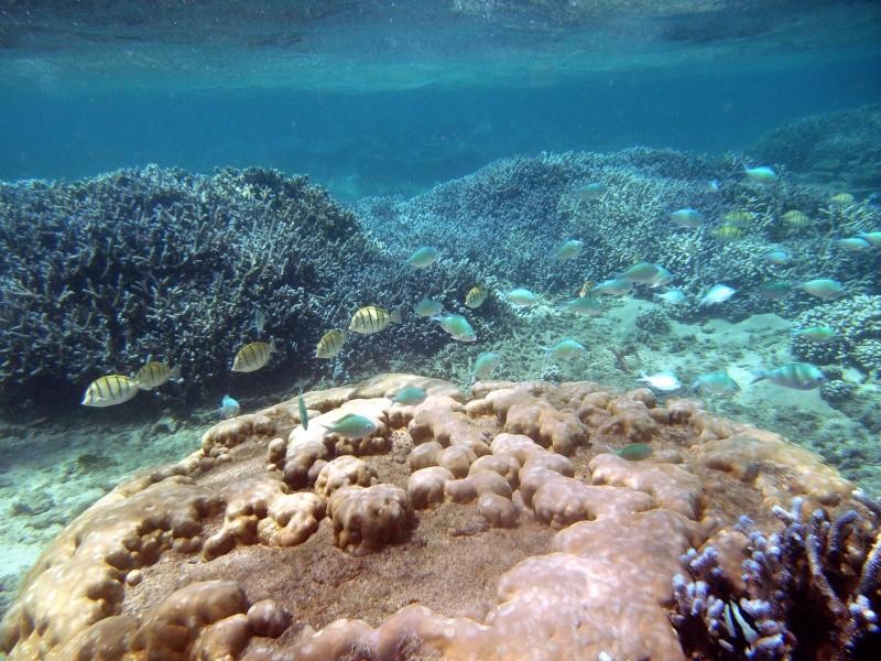 Les fonds sous marins de l'ïle de la Réunion... Img_0614