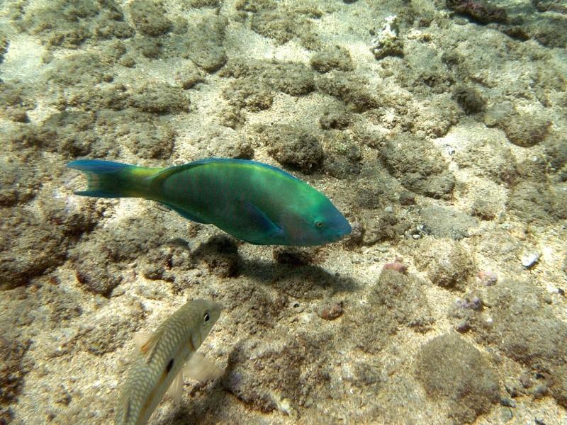 Les fonds sous marins de l'ïle de la Réunion... Img_0616