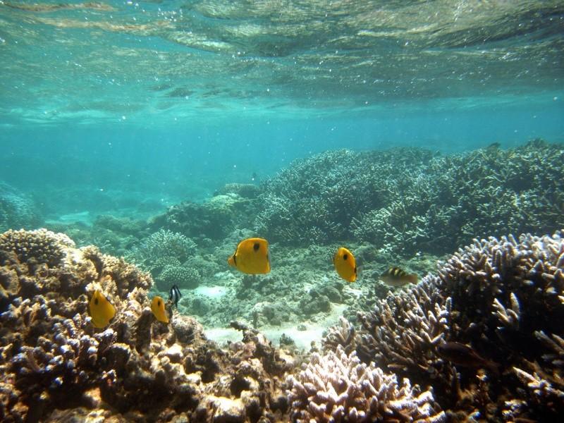 Les fonds sous marins de l'ïle de la Réunion... Img_0617