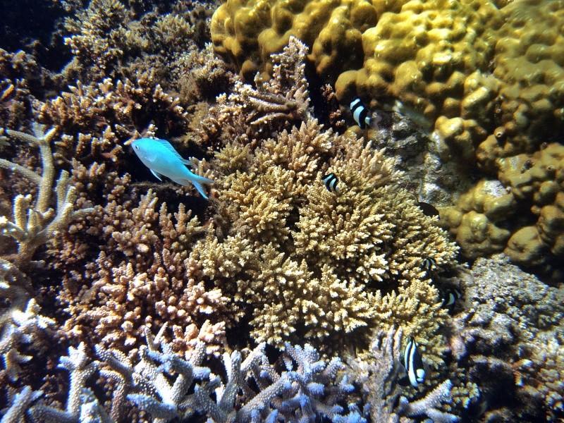 Les fonds sous marins de l'ïle de la Réunion... Img_0618
