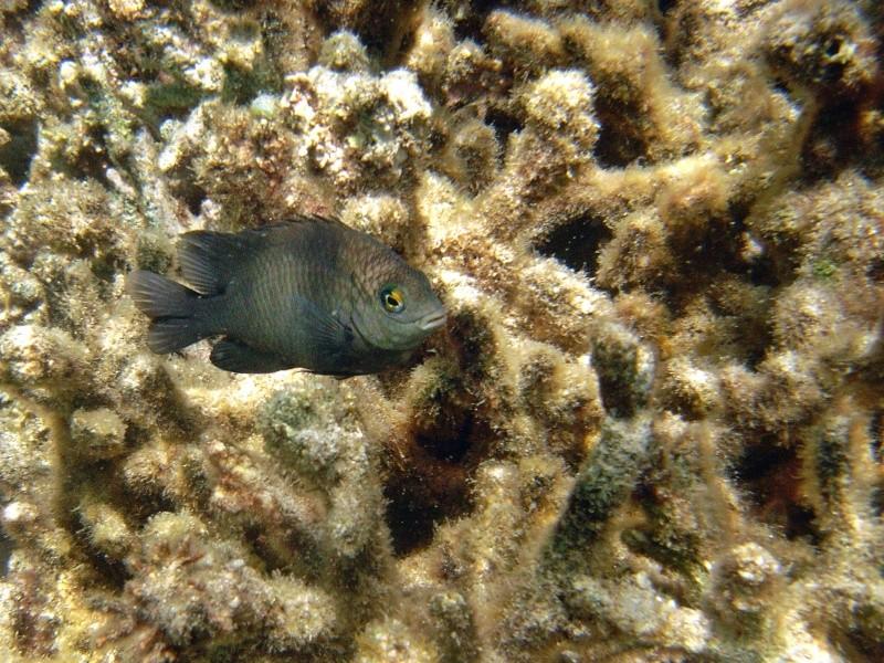 Les fonds sous marins de l'ïle de la Réunion... Img_0619