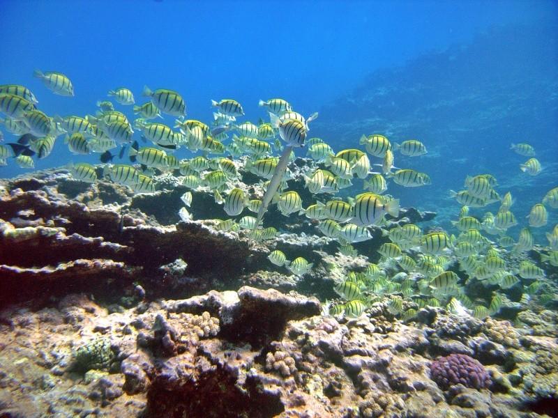 Les fonds sous marins de l'ïle de la Réunion... Img_0621