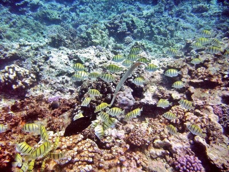 Les fonds sous marins de l'ïle de la Réunion... Img_0622