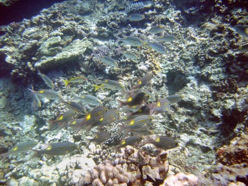 Les fonds sous marins de l'ïle de la Réunion... Img_0623