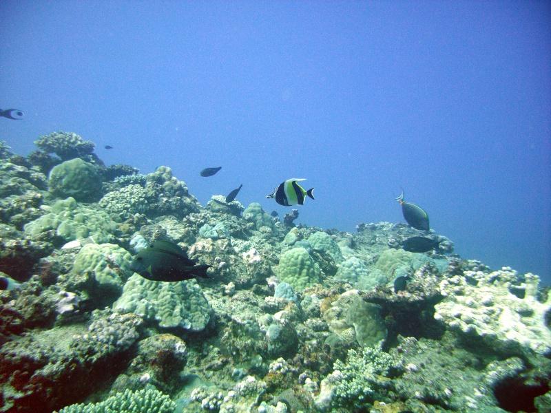 Les fonds sous marins de l'ïle de la Réunion... Img_0624
