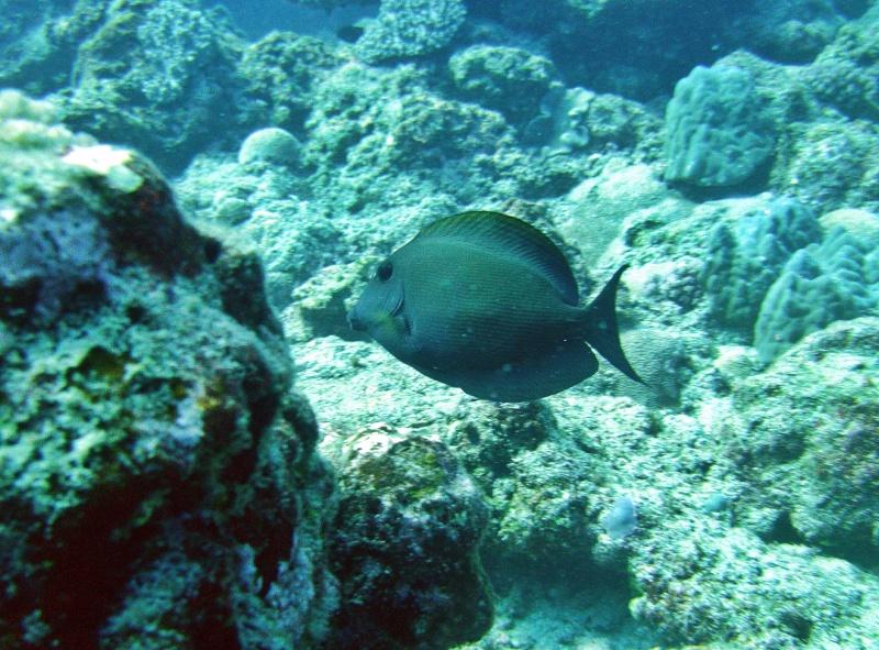 Les fonds sous marins de l'ïle de la Réunion... Img_0625