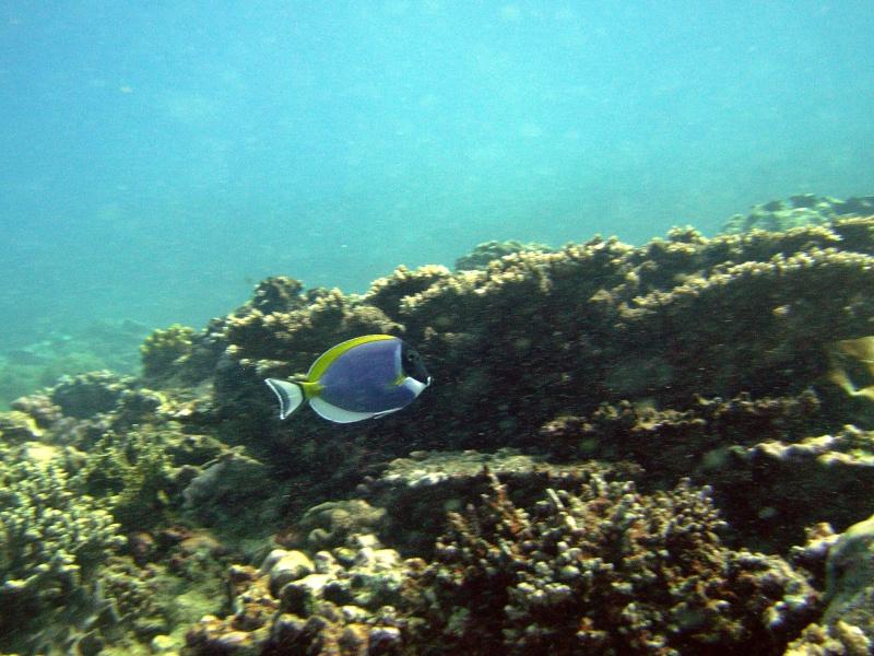Les fonds sous marins de l'ïle de la Réunion... Img_0626