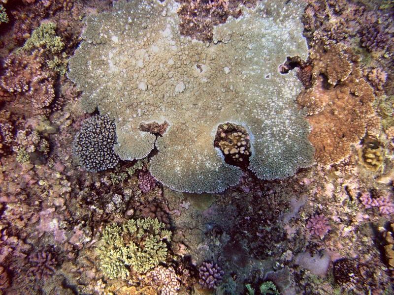 Les fonds sous marins de l'ïle de la Réunion... Img_0628