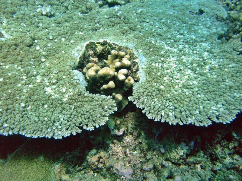 Les fonds sous marins de l'ïle de la Réunion... Img_0629