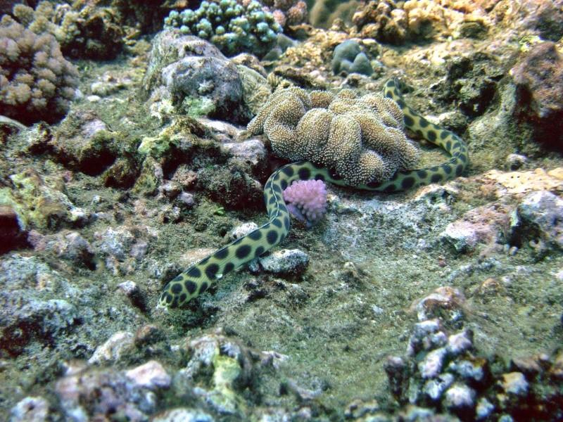 Les fonds sous marins de l'ïle de la Réunion... Img_0630