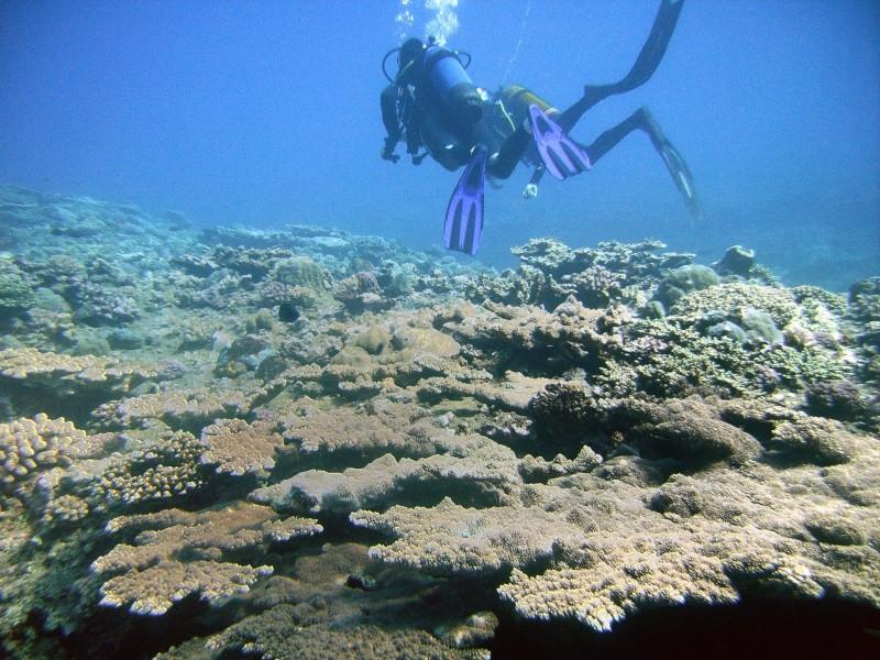 Les fonds sous marins de l'ïle de la Réunion... Img_0631