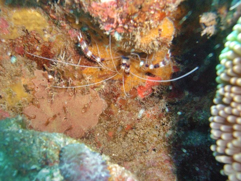 Les fonds sous marins de l'ïle de la Réunion... Img_0633