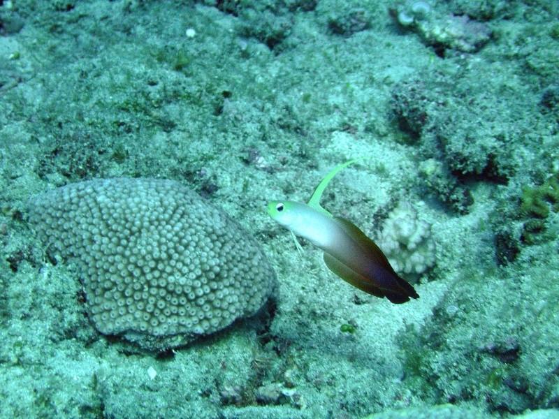 Les fonds sous marins de l'ïle de la Réunion... Img_0634