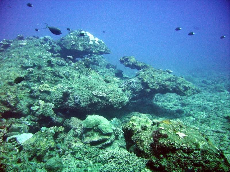 Les fonds sous marins de l'ïle de la Réunion... Img_0635