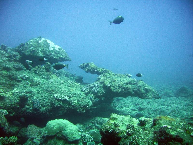 Les fonds sous marins de l'ïle de la Réunion... Img_0636