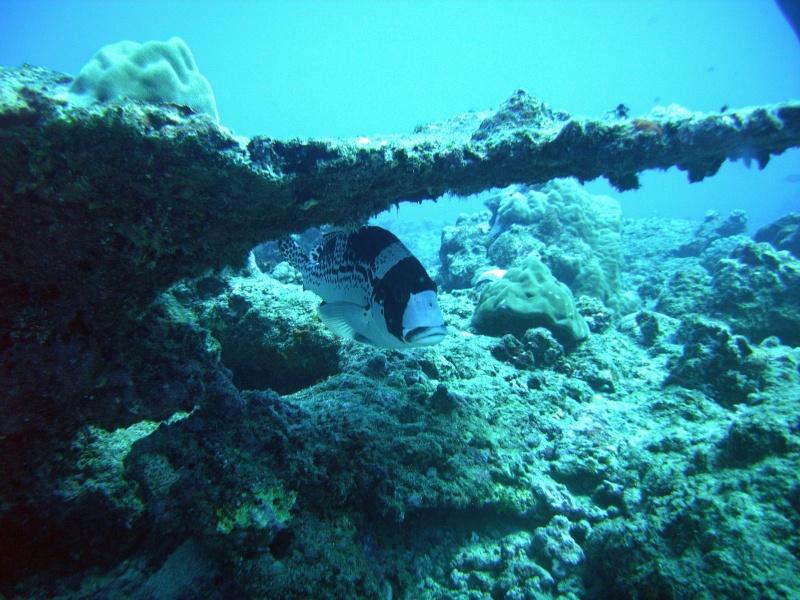 Les fonds sous marins de l'ïle de la Réunion... Img_0637