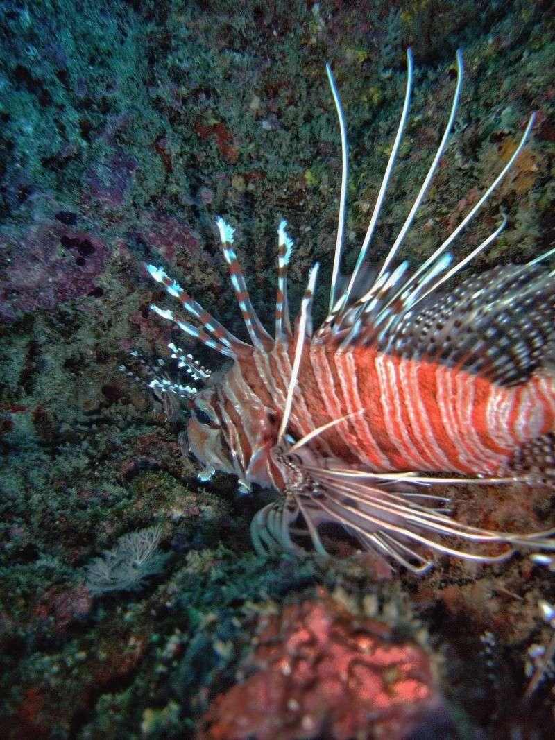 Les fonds sous marins de l'ïle de la Réunion... Img_0640