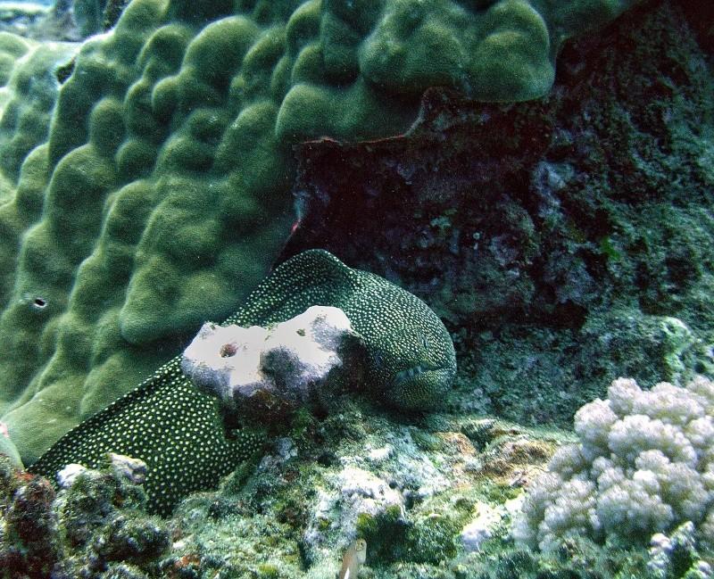 Les fonds sous marins de l'ïle de la Réunion... Img_0643