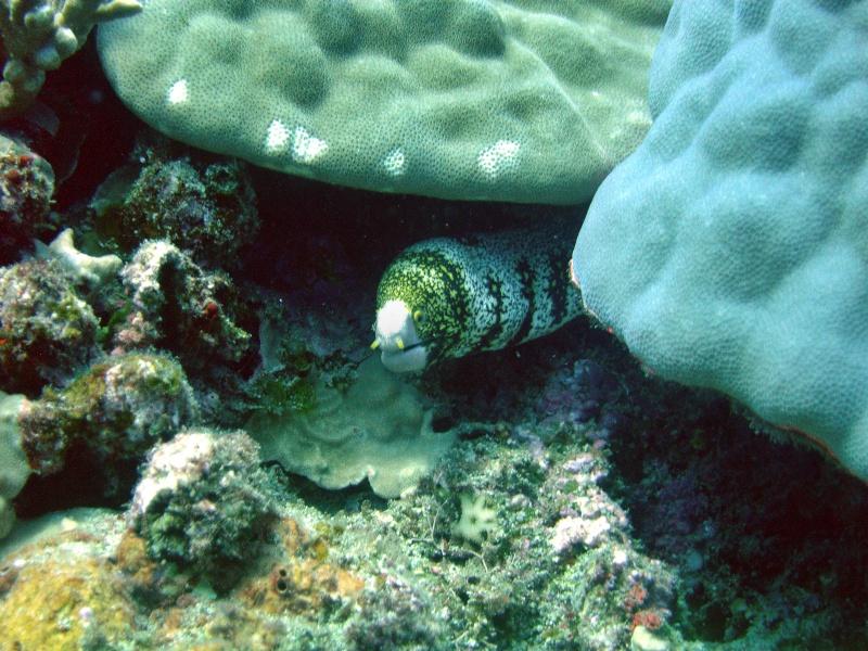 Les fonds sous marins de l'ïle de la Réunion... Img_0644