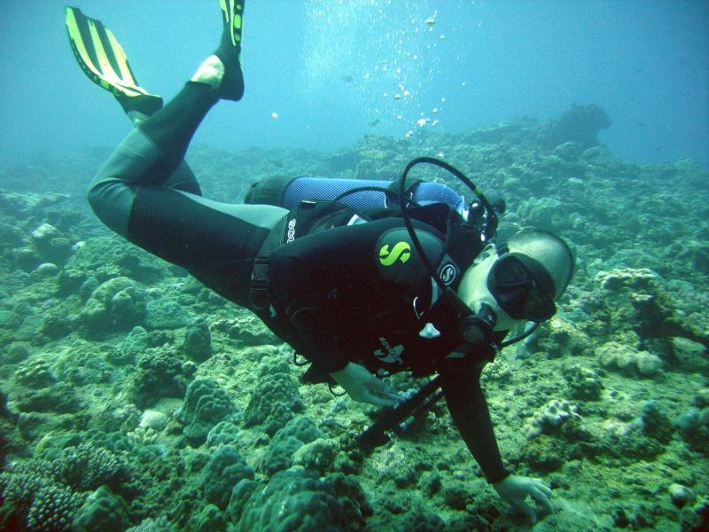 Les fonds sous marins de l'ïle de la Réunion... Img_0645