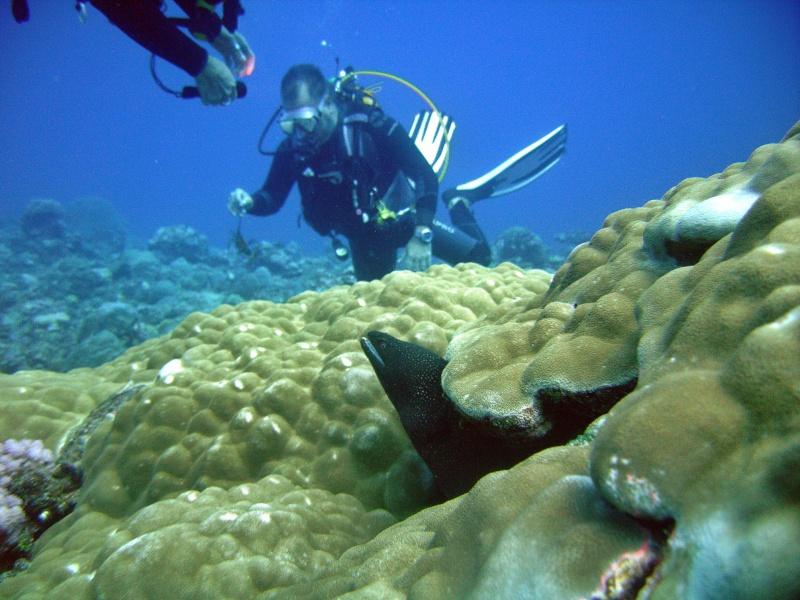 Les fonds sous marins de l'ïle de la Réunion... Img_0646