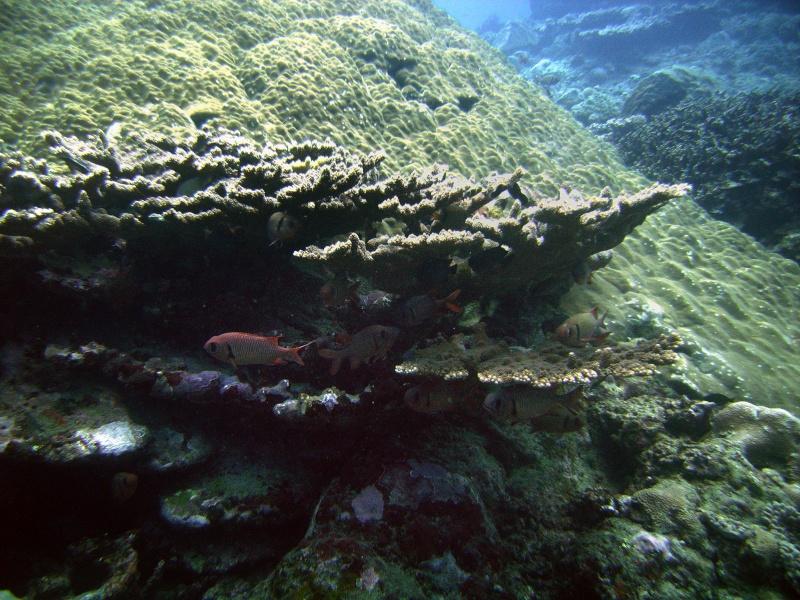 Les fonds sous marins de l'ïle de la Réunion... Img_0647