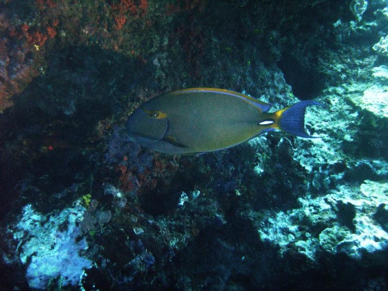 Les fonds sous marins de l'ïle de la Réunion... Img_0648