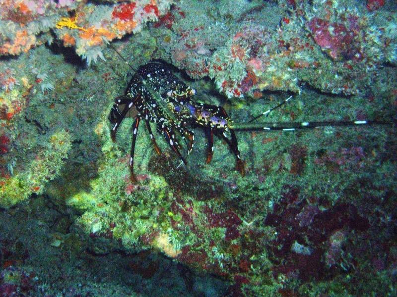 Les fonds sous marins de l'ïle de la Réunion... Img_0649