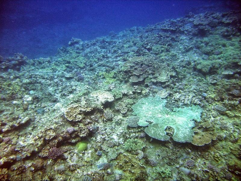 Les fonds sous marins de l'ïle de la Réunion... Img_0650