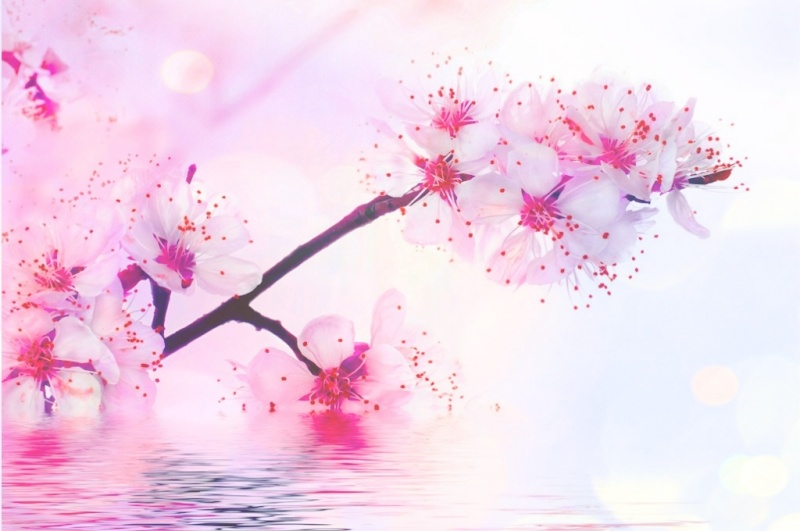 [Iwasa Misaki] Enka Koisuru fortune cookie - Page 5 Fleur-10