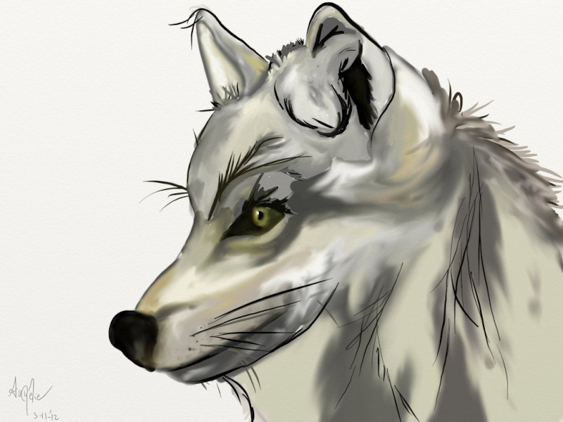 Maytook dessine  Loup10