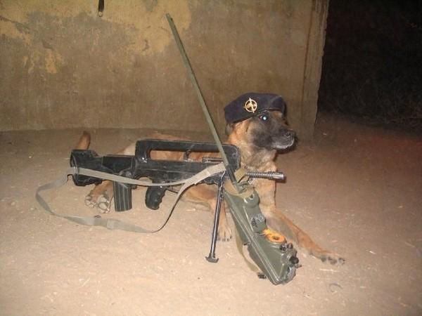 Mon chien, ce soldat . 1lllfr10