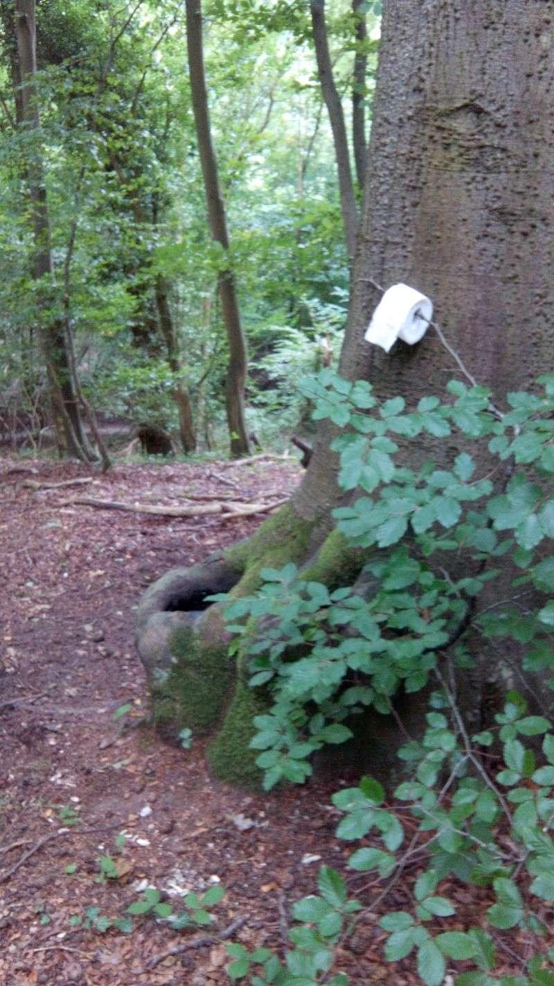 Jeudi 21  ou Vend. 22 Août 2014: Qui veut rouler le matin dans la forêt de La Londe ??? - Page 2 Img_2014