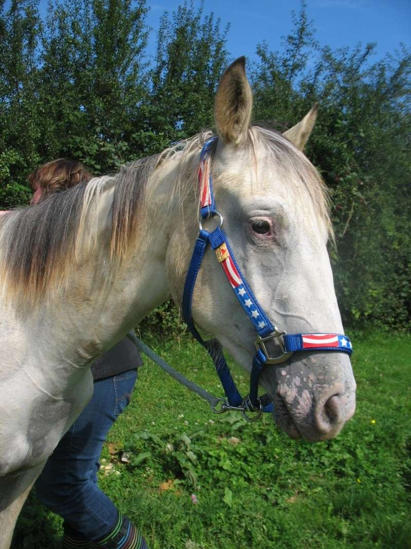 vends pouliche appaloosa PP Dune Miracle Layon Aoyt_210