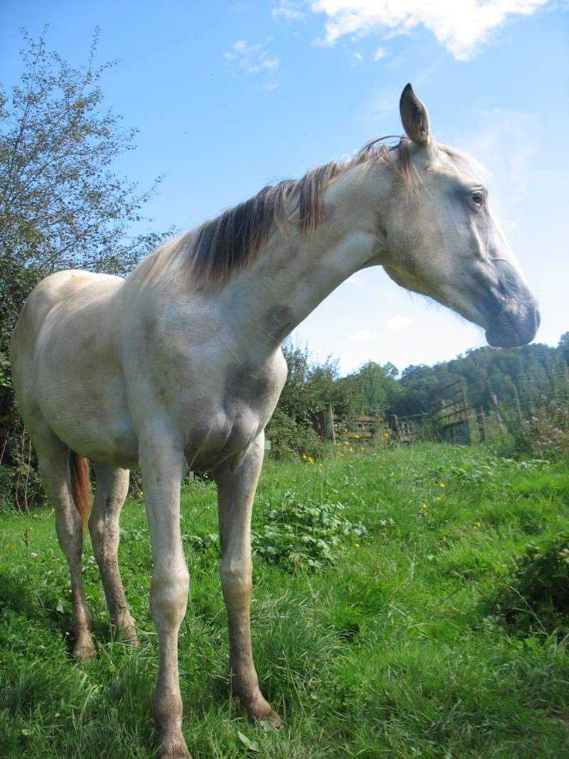 vends pouliche appaloosa PP Dune Miracle Layon Aoyt_213